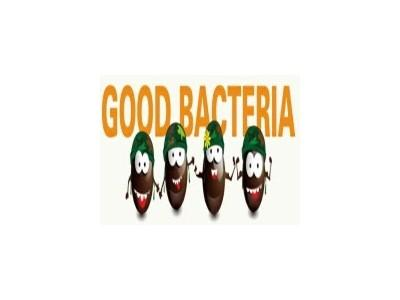 Một số khái niệm về vi khuẩn có lợi (probiotic)