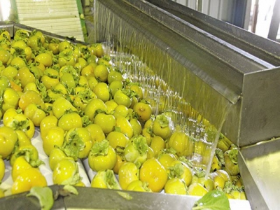 Sharon fruit in SA – growing local and export sales