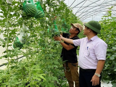 High-tech farming brings good profits to former graphic designer