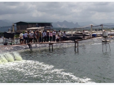 Phòng trị bệnh cho cá trong mùa mưa lũ