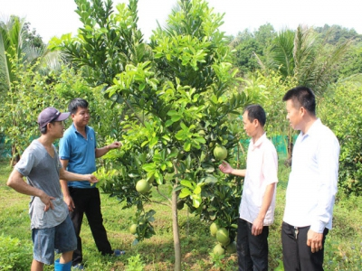 Farmers in Yen Mong commune converted their crop structure effectively
