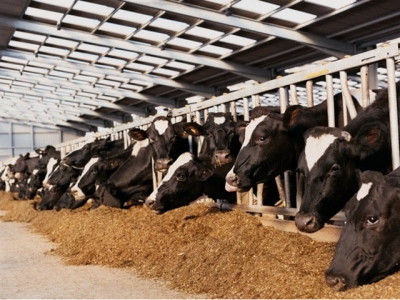 Take feed advice to cut carbon emissions, says UK body