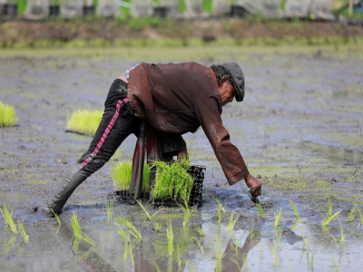 Asia Rice-African demand boosts Vietnam rates, India prices dip to 4-month low