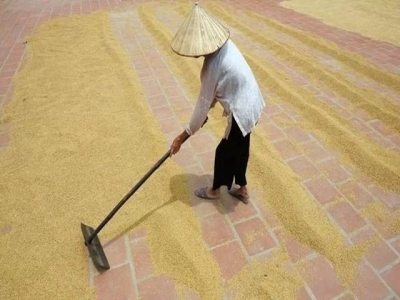 Jan-Sep rice exports plummet
