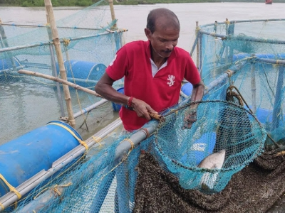Why cage-based aquaculture is all the rage in India