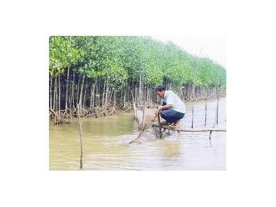 Kỹ Thuật Nuôi Tôm Sinh Thái (Rừng - Tôm) Kết Hợp