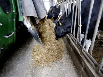 Chromium use in transition cows