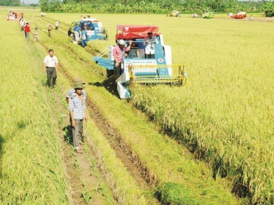 Agriculture must remove the barriers in land accumulation for 'taking off'