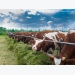 Nutrition 2.0 could bring dietary changes for dairy cows