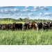 New method developed for monitoring pasture nutrients