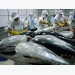 Tuna exports to Italy soar