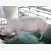 Electronic feeding systems limit feed waste, localize sow nutrition