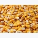 Feed formulation: How to maximize corn in pig diets