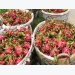 Long An exports 50 tonnes of dragon fruit by sea a day