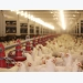 What are the major enzymes used in poultry feeds?