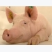There is so much more to know about sows