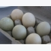 Everything You Need to Know About Duck Eggs