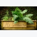 How to Make a Raised Bed Vegetable Garden