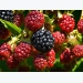 Ask Modern Farmer: How Long Do Fruiting Plants Live?