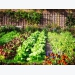 Get the balance right in your vegetable garden