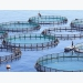 In pictures Nine ecological models for aquaculture
