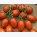 Higher US tomato market beckons in the Fall