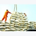 Rice exports: Opportunities in traditional markets