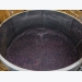 Grape pomace may support farmed fish facing disease challenge
