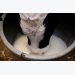 Milk with residues: Feed for calves?