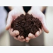 10 Easy Soil Tests That Pinpoint Your Garden's Problems