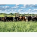 Multiple options available to manage cattle nutrients