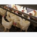 Calculating additional resource needs in cage-free