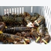 Price of commercial lobster increases by 200-300 thousand VND per kilogram