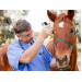 Horse Health: Hydrating Your Horse after Running or Racing