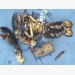 Lobster shell disease moving towards Maine