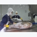 Tuna exports to several markets rocket