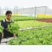 Vietnam, Netherlands enhance cooperation in agriculture