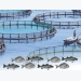 A Guide to Acceptable Procedures Practices for Aquaculture Fisheries Research - Part 3