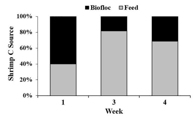 Biofloc and clear-water RAS systems: a comparison